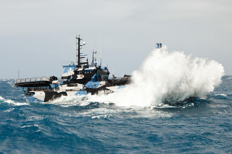 Sea-Sheherd-Schiff-2
